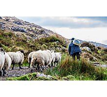 Lamb Pride Photographic Print