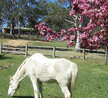 white horse under flowering tree by putzig