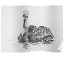 Brown Pelican on Water Poster