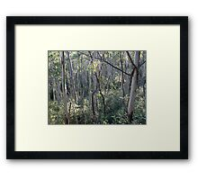 Mountain Ash Trees Contre Jour Framed Print