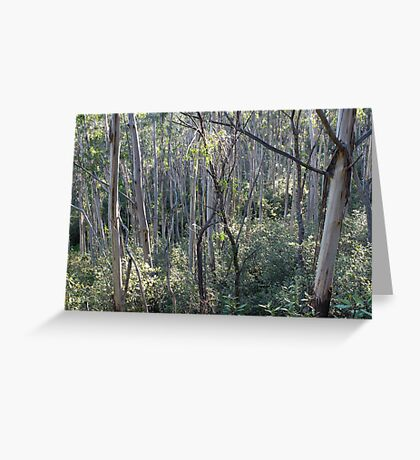 Mountain Ash Trees Contre Jour Greeting Card