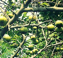 Crab Apples by artbybutterfly