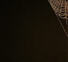 Spider Web by atessman