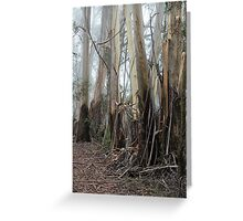 Mountain Ash Trees 2 Greeting Card