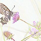Swallowtail Butterfly in Pastel by hummingbirds
