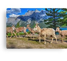 March of the Sheep Canvas Print