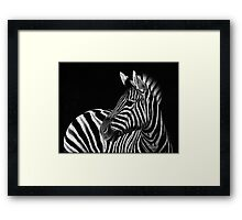 Zebra No. 3 Framed Print