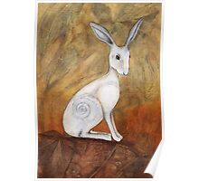 White Hare at Sunset Poster