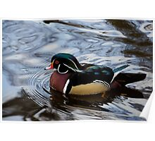 Colorful Forest Jewel - a Wood Duck in a Secluded Lake Poster