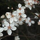 Blossom in Springtime by Art Hut