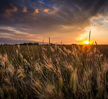 Summer Fields by cjrichardsphoto