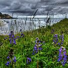 Just To See The Sea by Charles & Patricia   Harkins ~ Picture Oregon