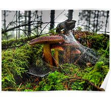 Just Try To Stop Me ~ Wild Mushrooms ~ Poster