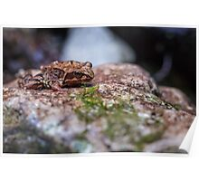 Macro of a brown frog Poster
