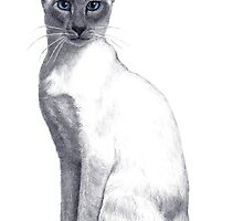Siamese Cat by HandsonHart