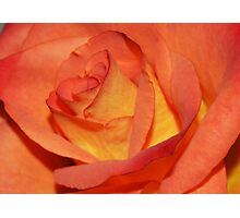 Macro Rose Photographic Print