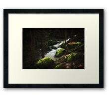 Woodland Magic Framed Print