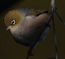 Bird on a wire by Geoff Soper