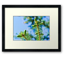 New Growth Framed Print