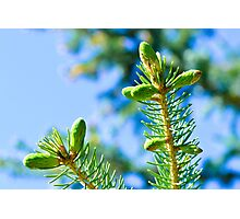 New Growth Photographic Print