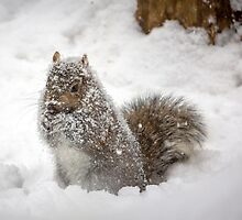 Abominable Squirrel by Mikell Herrick