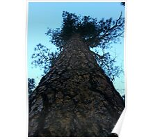 The Big Tree Poster