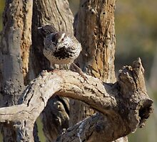 Cactus Wren~  Curiosity Catch by Kimberly Chadwick