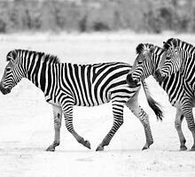Zebra Crossing by Michael Farley