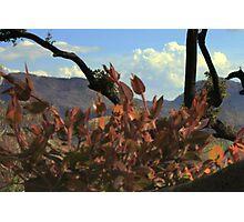 New growth on fallen tree Photographic Print