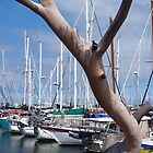 Hastings Marina by Carmel Abblitt