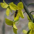 bug life by doug hunwick