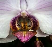 orchid by doug hunwick