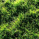 Exploring Texture - Grass by scat53