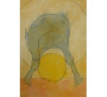 BLUE HORSE STRADDLING YELLOW BALL Photographic Print