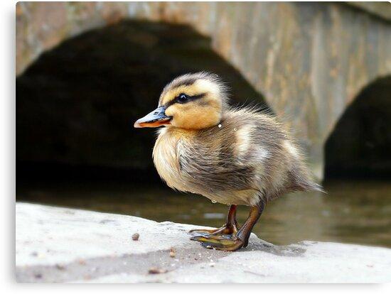 Little Quack ! by Morag Bates