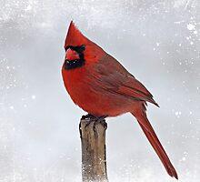 Cardinal Perching by Sandy Keeton