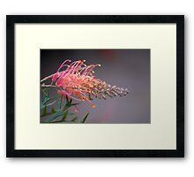 Grevellia Framed Print
