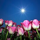 Field of Pink Tulips by Henry Jager