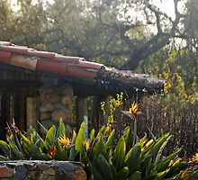 Bird of Paradise at Leo Carillo Ranch House by Robert W.  Feuerstein