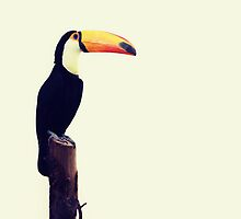 Happy Toucan by cjrush