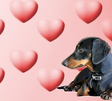 Puppy love 2 by Sarah Guiton