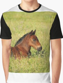 horse brown foal lying in pasture Graphic T-Shirt