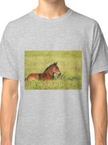 horse brown foal lying in pasture Classic T-Shirt