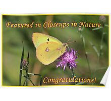 Closeups in Nature Feature Banner Poster