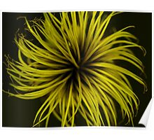 Clematis Abstract Yellow Poster
