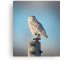 The Wise Snowy Owl Canvas Print