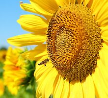summer scene with bee and sunflower  by goceris