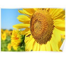 summer scene with bee and sunflower  Poster