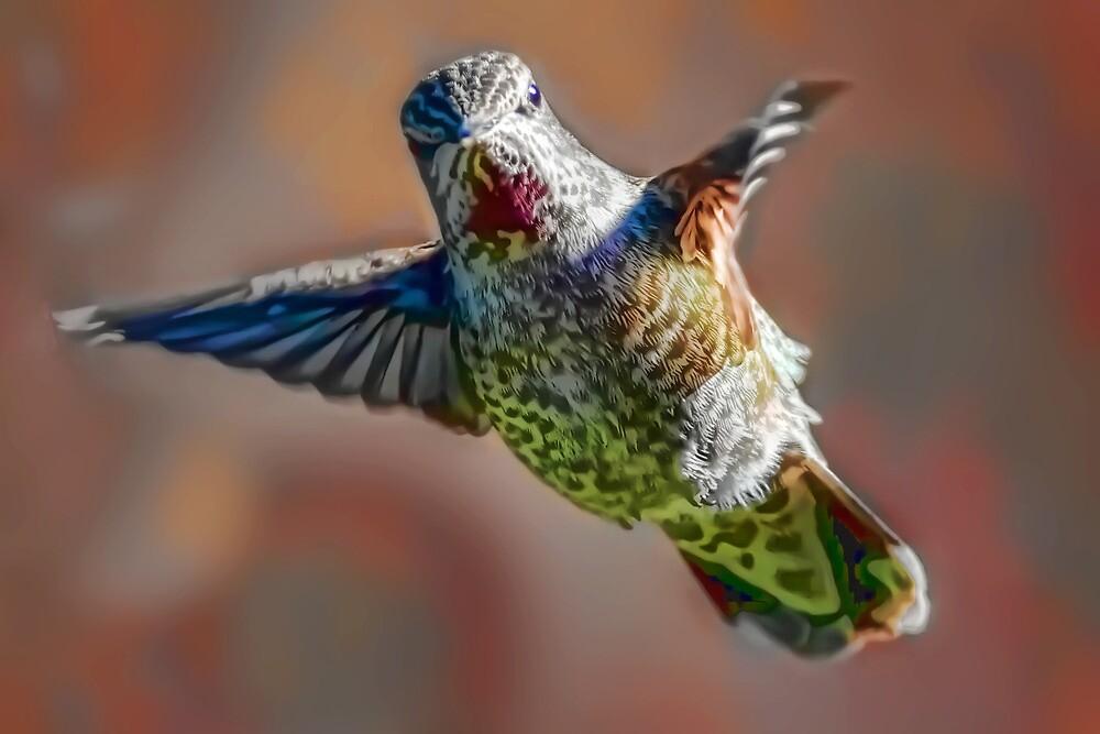 Hummingbird Dreams by Kenneth Haley