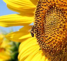 bee on sunflower summer scene by goceris